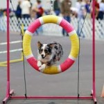 australian shep thru tire images (4)