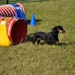 dachsy out of red tunnel images (16)
