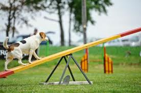dog going up see saw images (17)