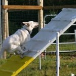 dog running up A frame images (12)