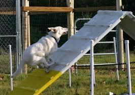 dog running up A frame images (12)