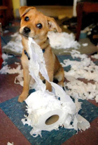 puggle tearing up toilet papaerIMG958135